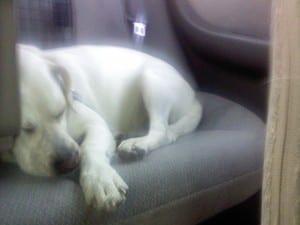Sleepin' in the backseat.