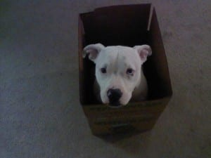 NORMAN in a box