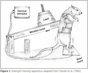 Rat Lifting Weights Graphic