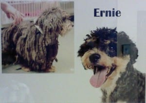 Ernie Before/After